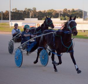 Common myths surrounding the standardbred